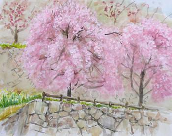 津山城のしだれ桜.jpg